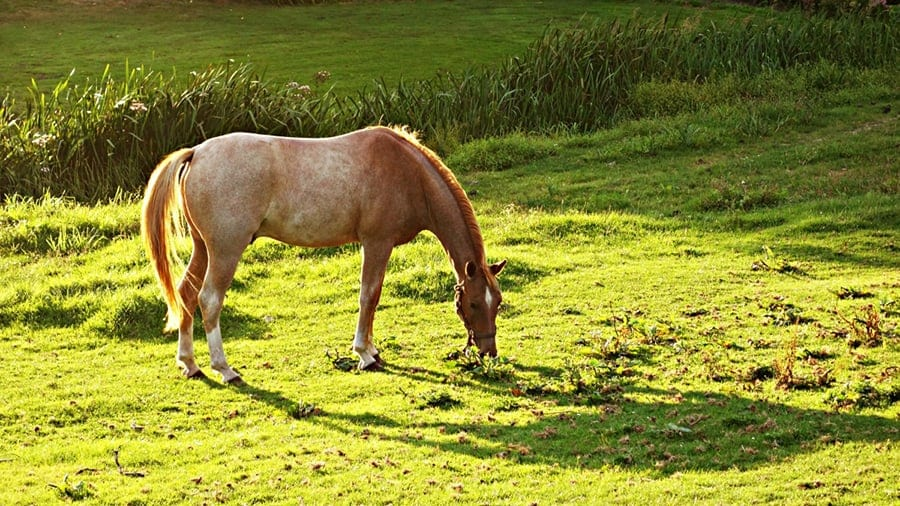 Do you have enough space to keep a horse in your backyard?