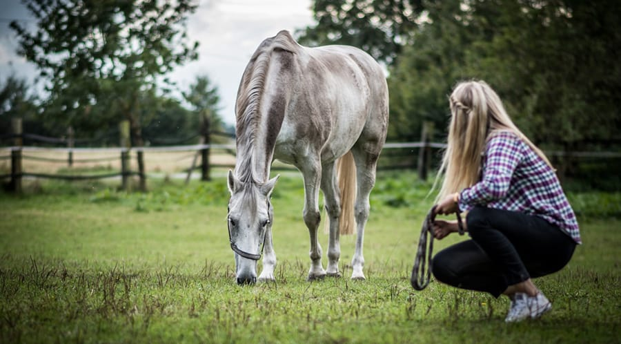 Understanding your horse will help you to know when something is wrong