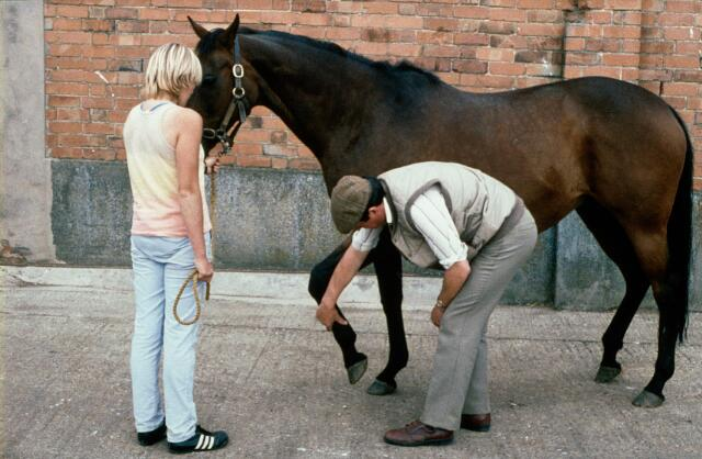Your veterinarian will carry out a detailed examination to diagnose the cause of your horse's lameness