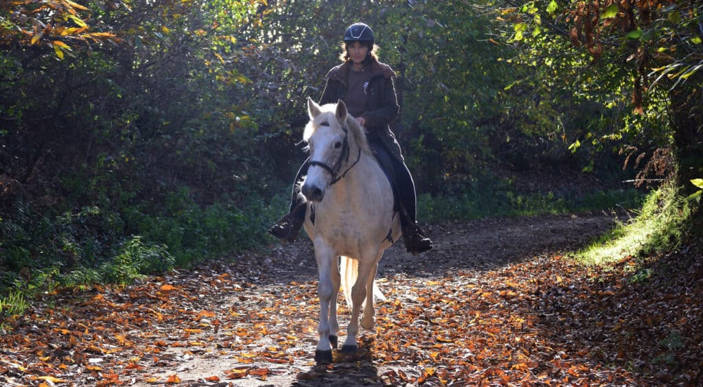 Horse riding is an incredible recreation that can work wonders at boosting your mood