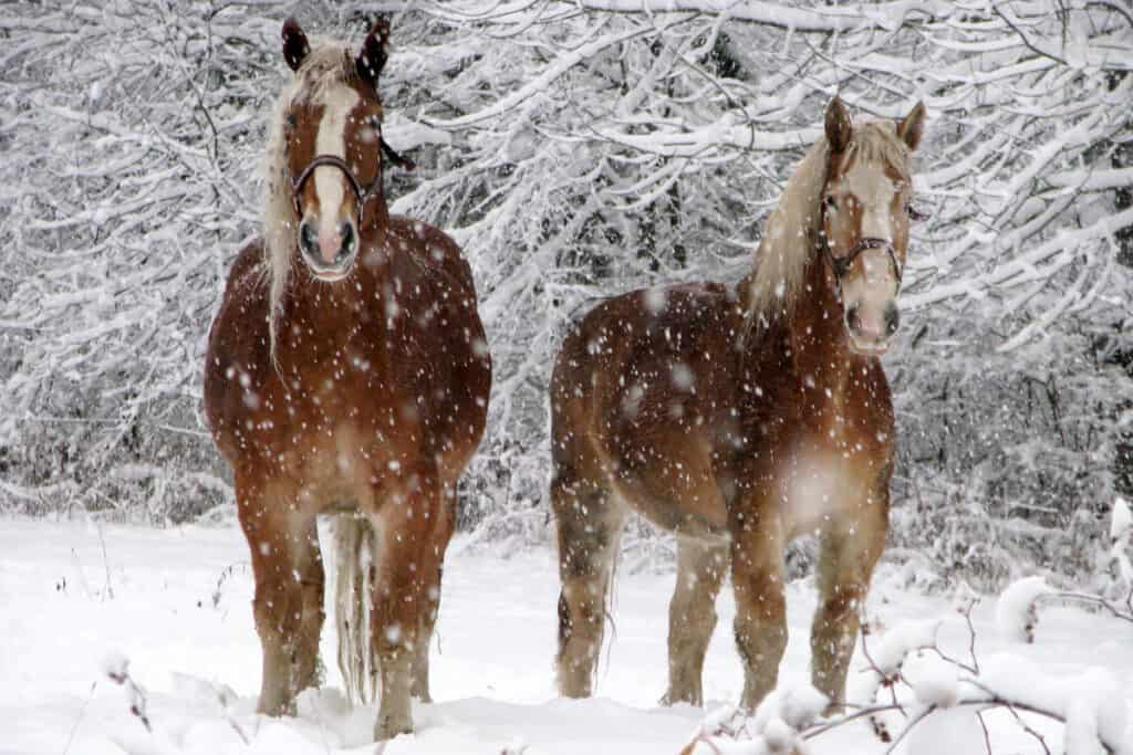 How do you warm up a horse that's too cold?