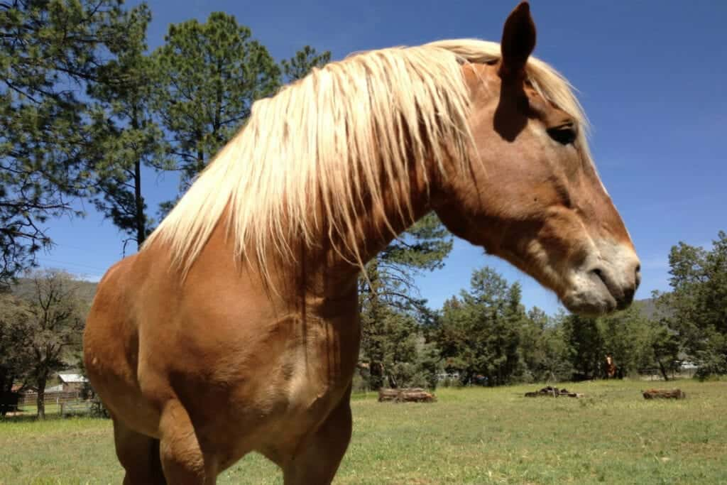 What should you do after you've bought your first horse?