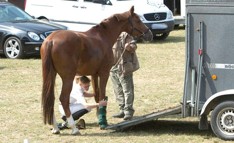 If you don't have your own horse trailer you can hire somebody to move your horse for you