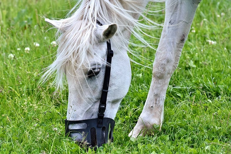 A grazing muzzle will reduce your horse's grass intake by up to 80%