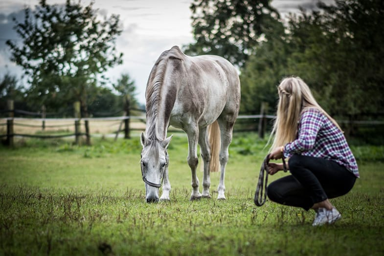 Teaching your horse to walk with you without a rope is extremely rewarding