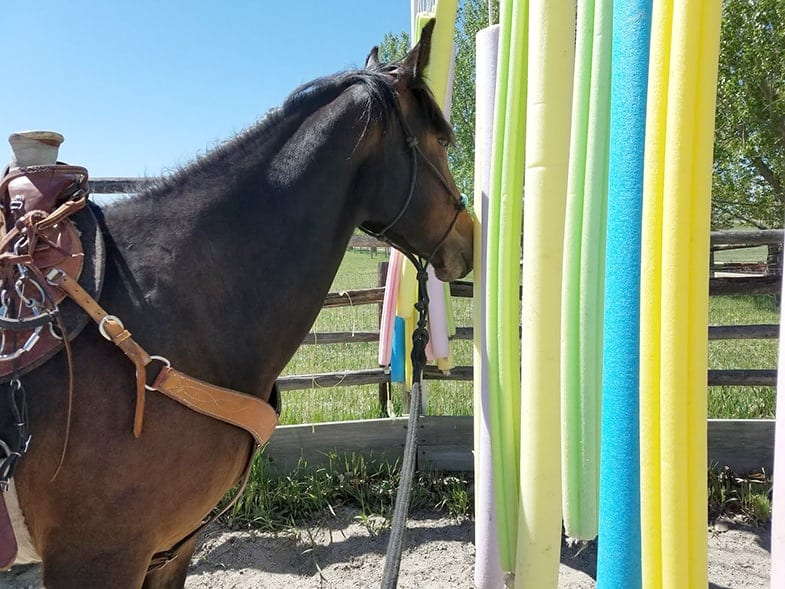 Pool noodles can help your horse overcome his fears