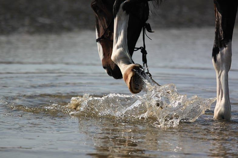 Allowing your horse to play in water can be great fun for them but also for you