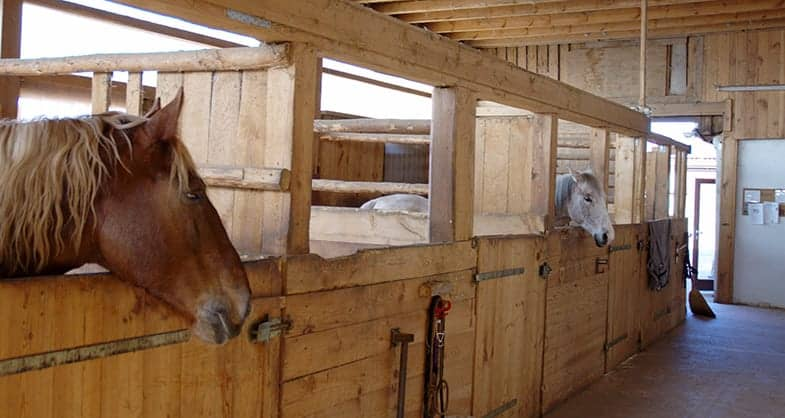 Where are you going to keep your new horse?