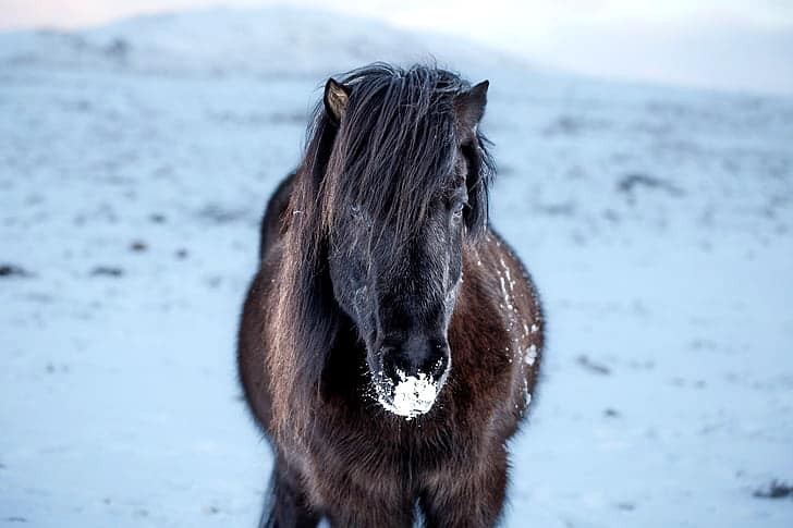 If horses don't move much during the winter they're likely to get very cold