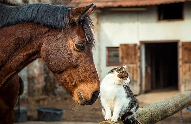 Cats and horses have been known to have very strong bonds