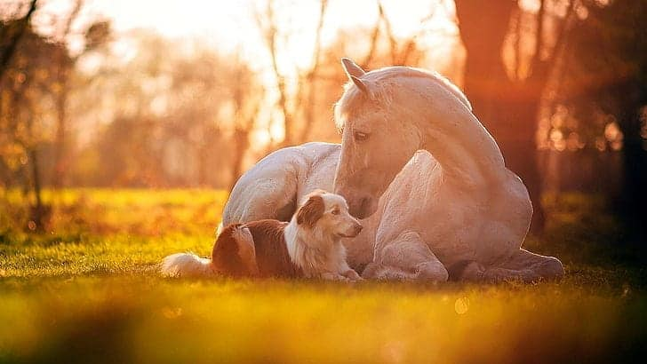 Horses and dogs get on very well