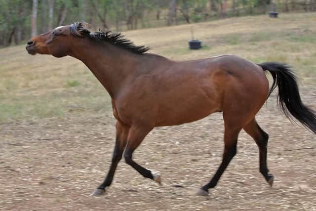 Some horses will follow your as a way of trying to assert their dominance