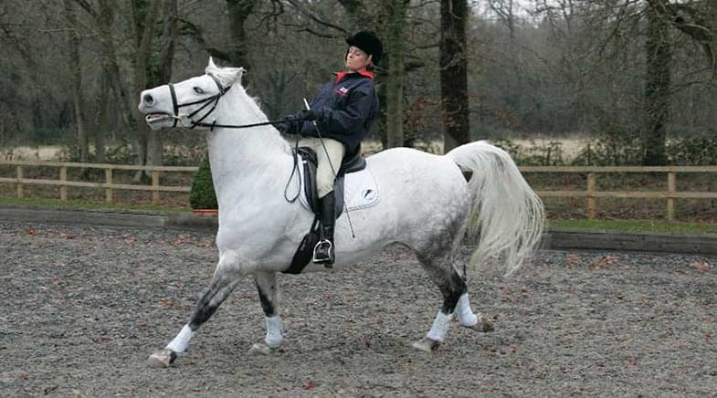 Poor riding can lead to a horse bolting out of shear frustration