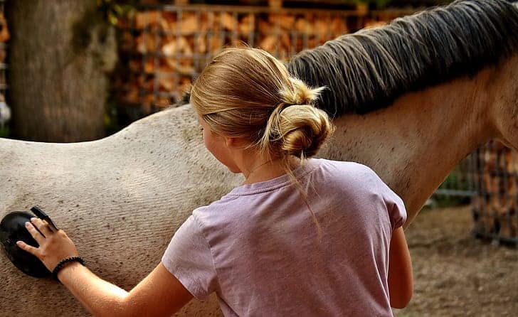There's a lot of work involved in caring for a horse