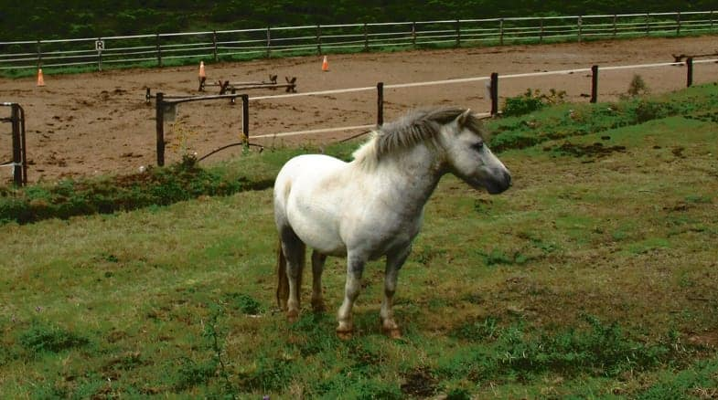 Horses are social animals and need the company of others