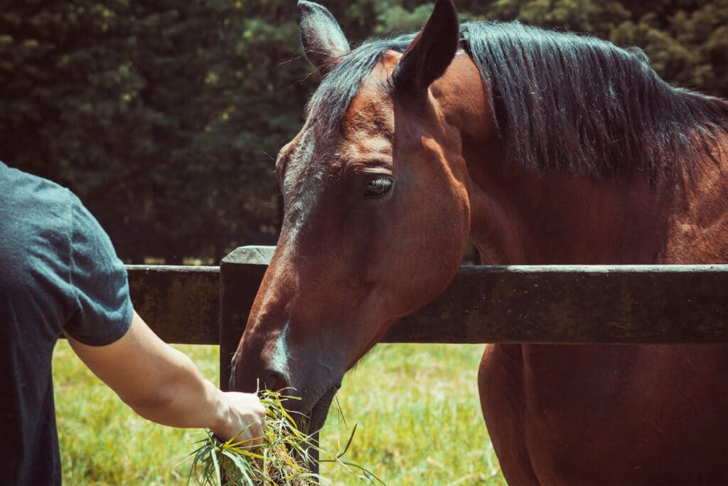 Overcoming your fear of horses can be extremely rewarding