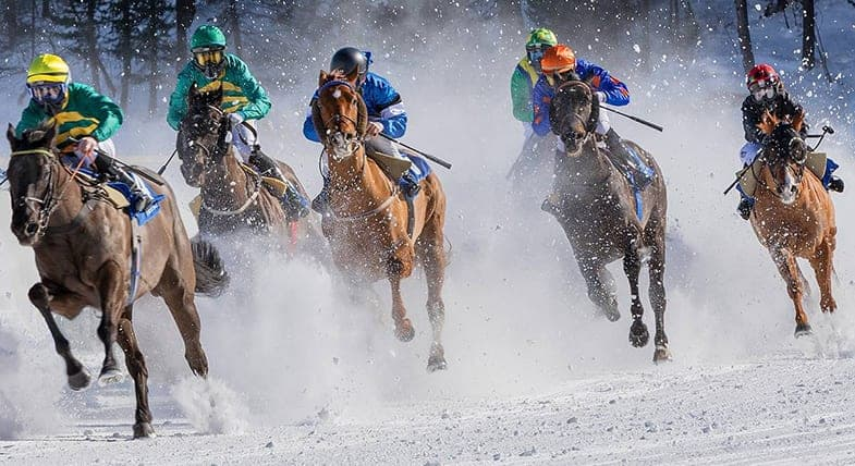 The best breeds for horse racing