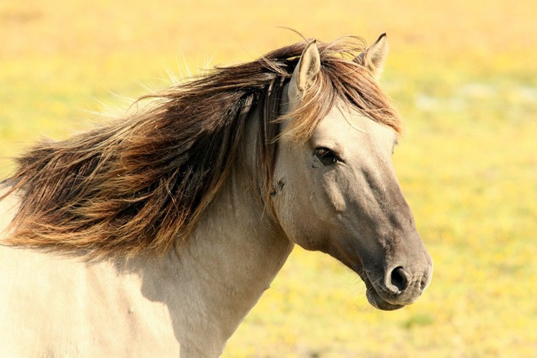 Desensitizing yourself to horses is a big step along the road to overcoming your fear of them