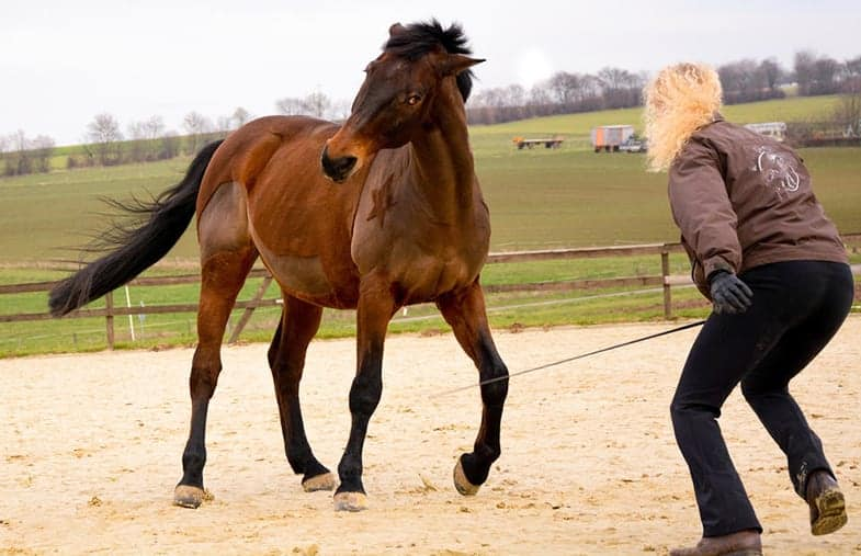 Use your body language to communicate with your horse