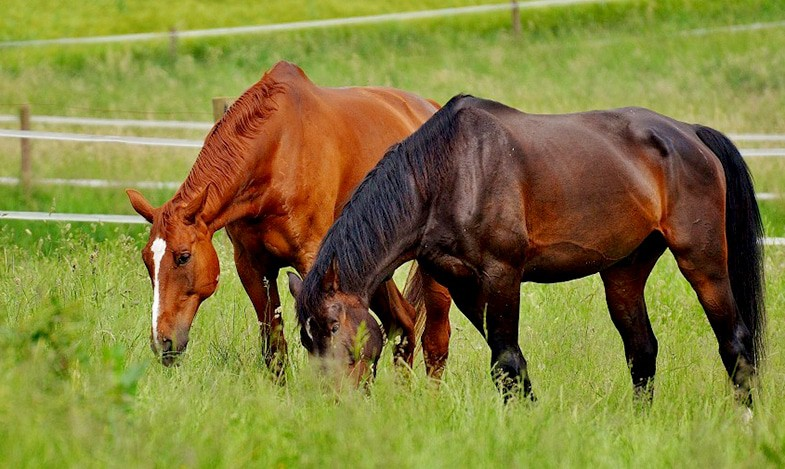 It's important to know why you're scared of horses if you want to overcome that fear
