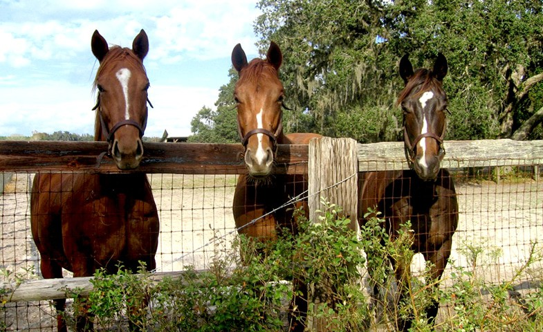 Visiting horses can help you to overcome your fear