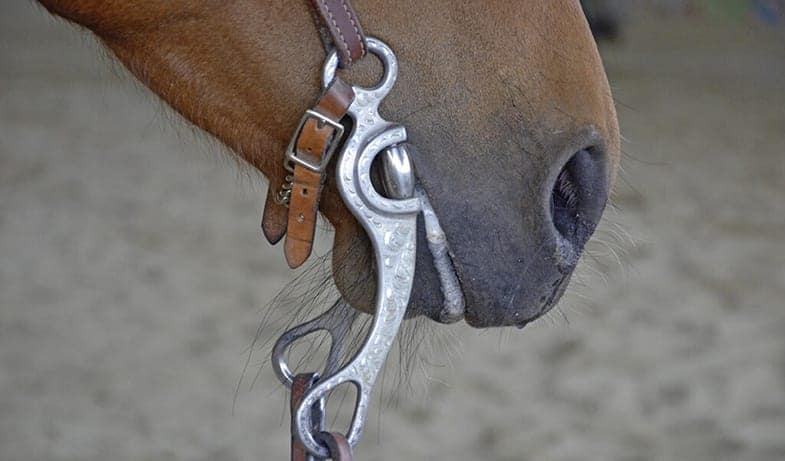 Everything you need to know about horse bits and mouthpieces