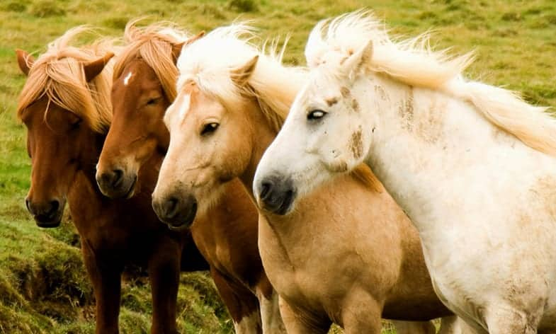 Horse come in a very wide range of colors and coat patterns