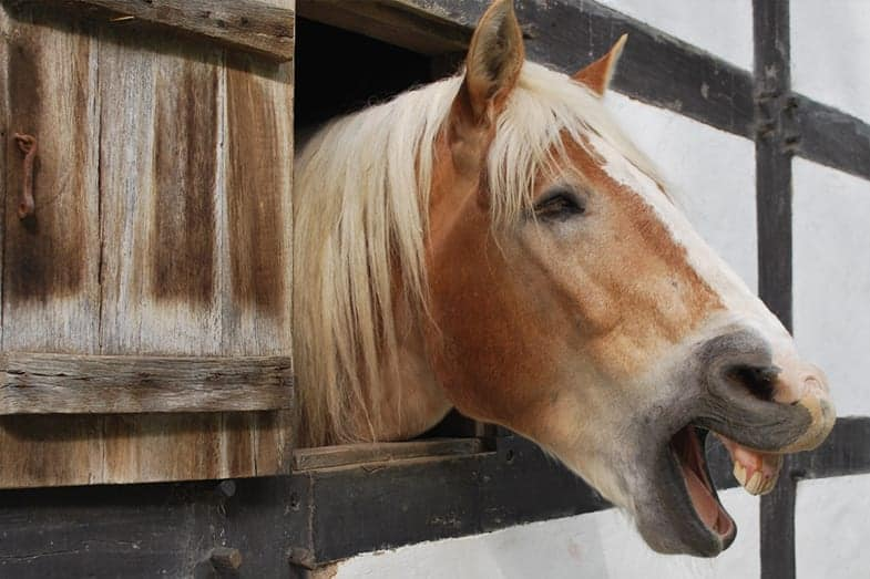 What do the sounds horses make mean?