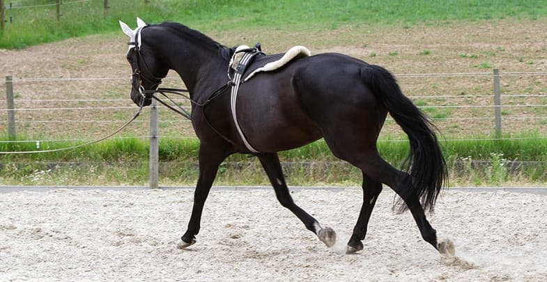 Train your horse without being aggressive