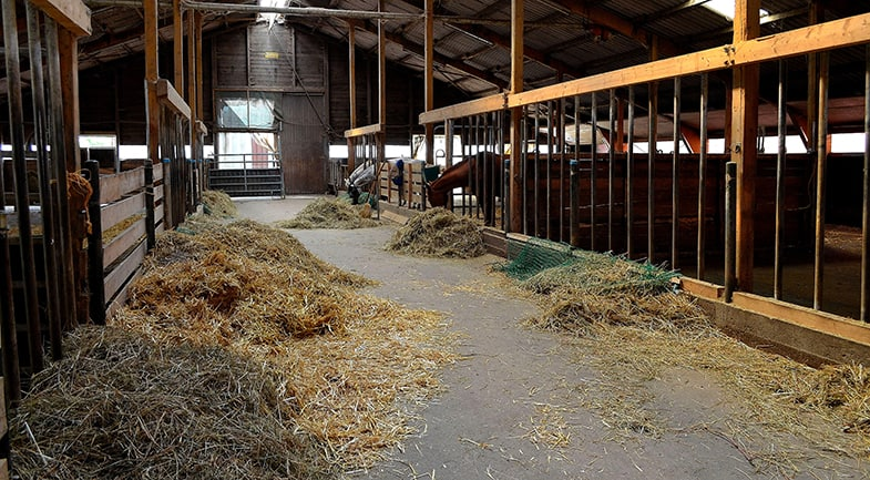 The appearance of the barns can be a good indication of how well maintained a boarding yard is