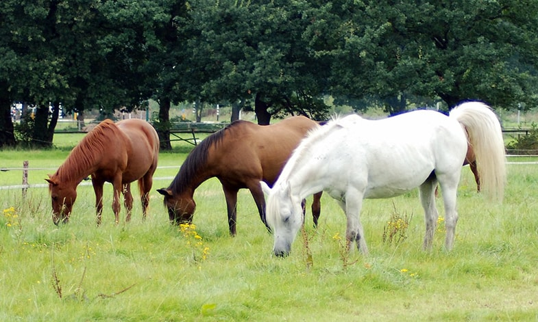 Is turnout included in your horse's boarding plan