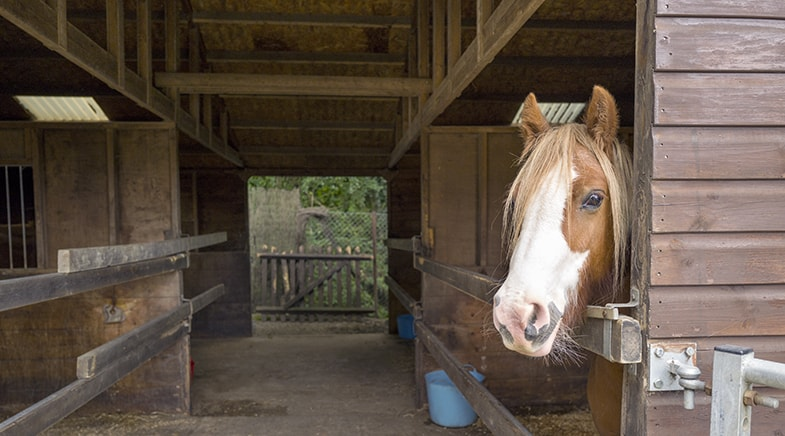 What's the policy for introducing a new horse at your yard?