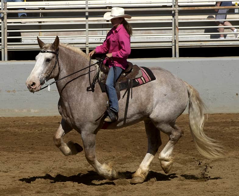 Draft horses are extremely versatile