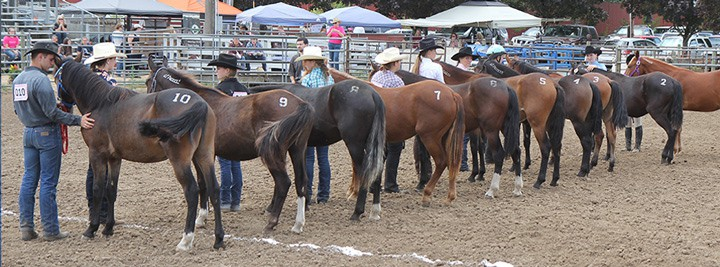 A horse auction can be a good place to buy a horse at a cheaper price