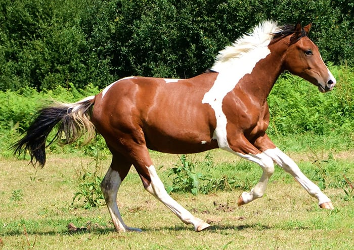27 excellent names for chestnut and white horses