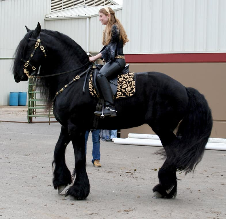 Draft horses can be a real conversation starter