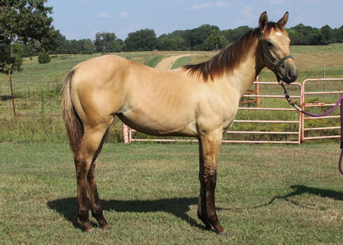 While you may be able to get a horse for nothing they're still expensive to keep