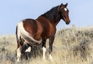 The Mustang is probably the cheapest horse breed you can buy