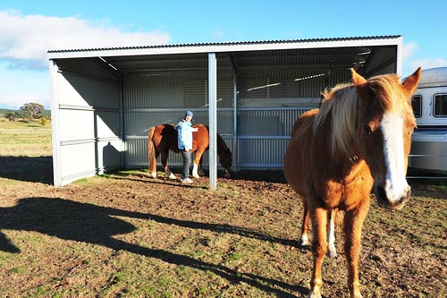 It's crucial your horse has a suitable shelter in his pasture