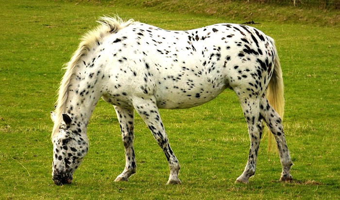 27 excellent names for spotted horses