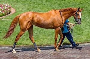 Thoroughbreds are much cheaper than you might think, especially if they're OTTBs